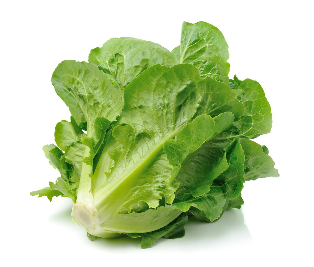 Organic Lettuce Cos (each)
