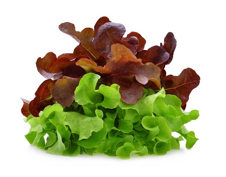 Organic Lettuce Oak red/green (each)