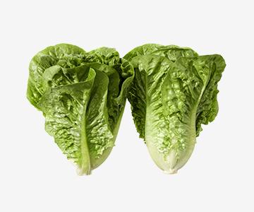Organic Lettuce Cos TWIN pack (each)